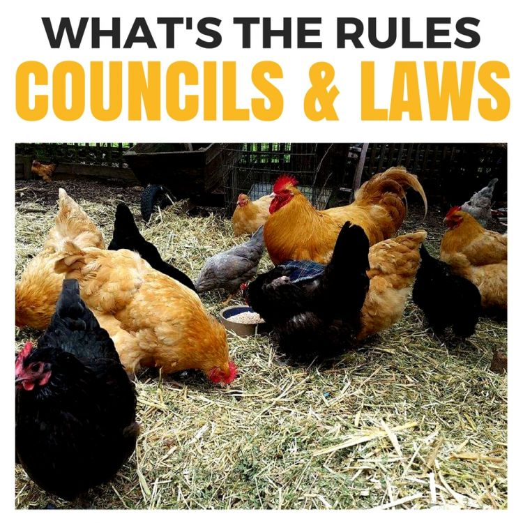 Keeping Chickens in your backyard and whats the Counicl Restrictions or Local Government Laws