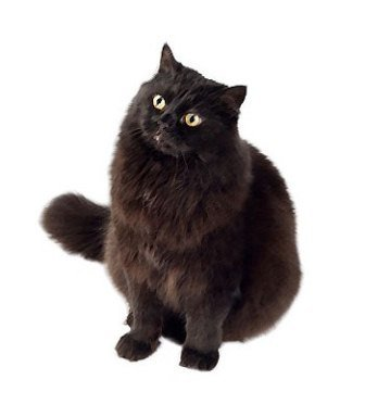 Ultimate List of Cat Breeds