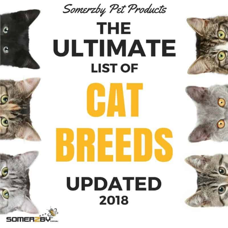 The Ultimate list of Cat Breeds - Update 2018