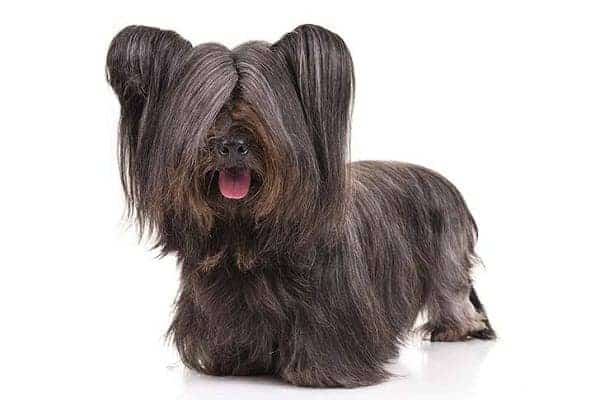 Small Dog Breeds The Ultimate List Of Dog Breeds 2019