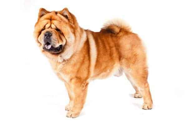 The Ultimate List Of 50 Big Dog Breeds For 2018