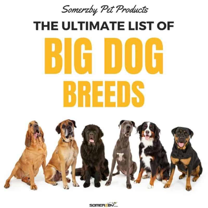 THE ULTIMATE LIST OF BIG DOG BREEDS