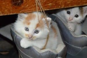 cat kittens in baskets