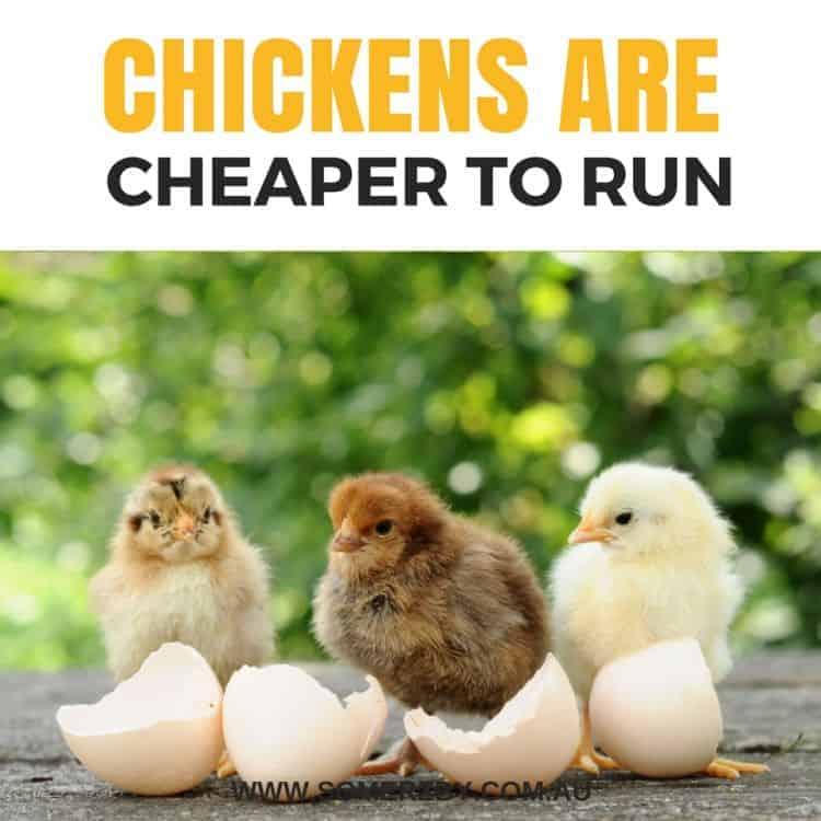 Chickens are cheaper to run