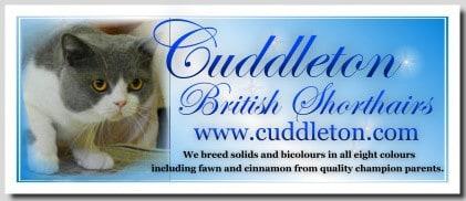 cuddleton