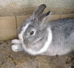 The Ultimate List of Rabbit Breeds in Australia
