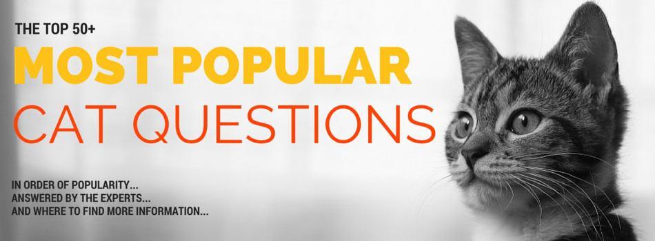 Googles Most Popular Cat Questions