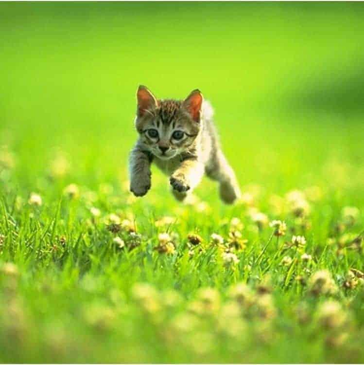 Kitten running