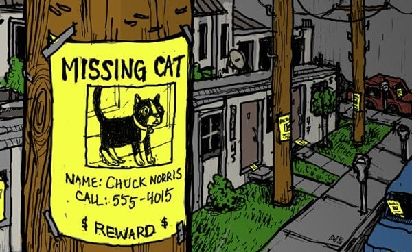 Put the cat posters up everywhere you can including animal shelters and rescues vets grocery stores parks