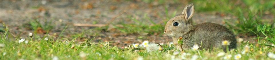 rabbit header