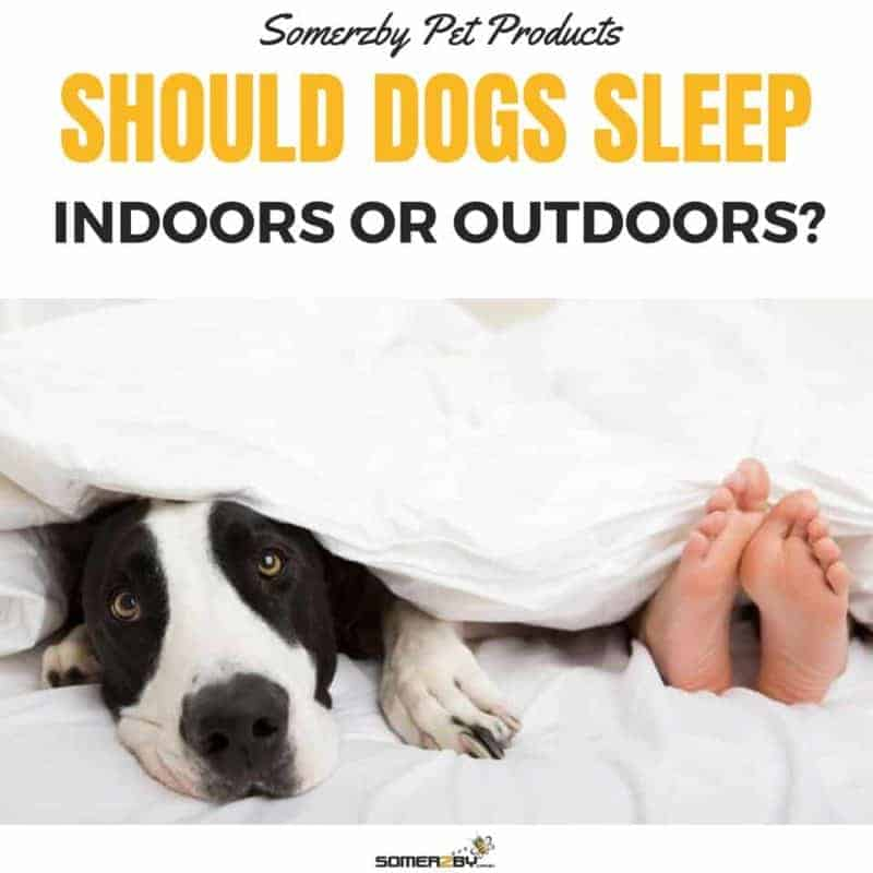 15a38ec22c9 Should My Dog Sleep Indoors or Outdoors