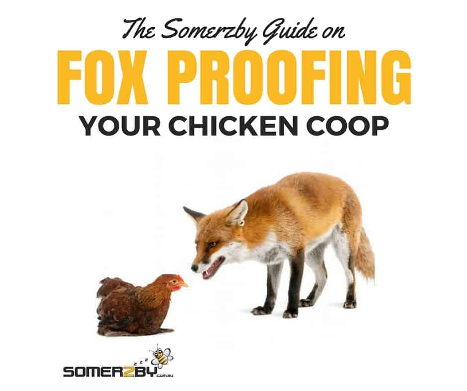 The Somerzby Guide on How to Fox Proof Your Chook Coop