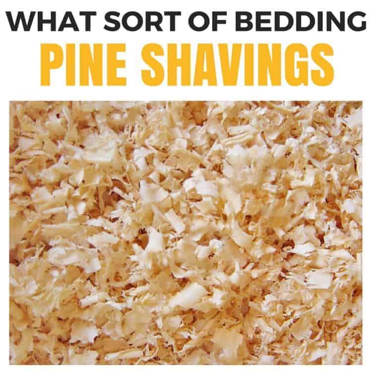 what sort of bedding - pine shavings