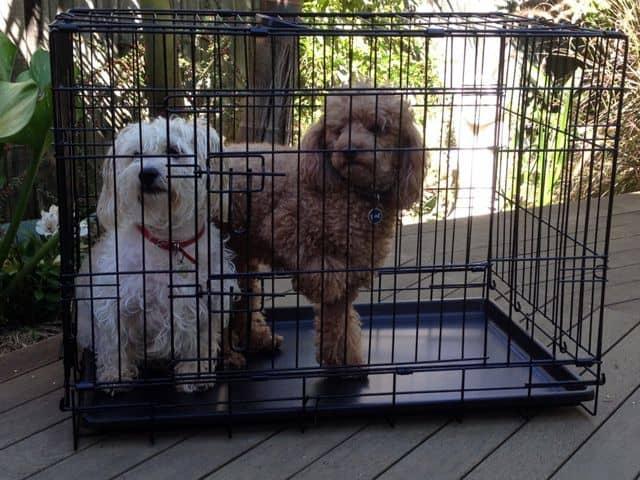 medium dog crate 30