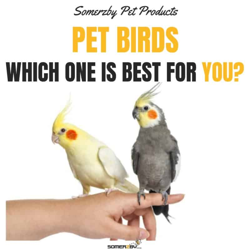 finding the perfect pet bird