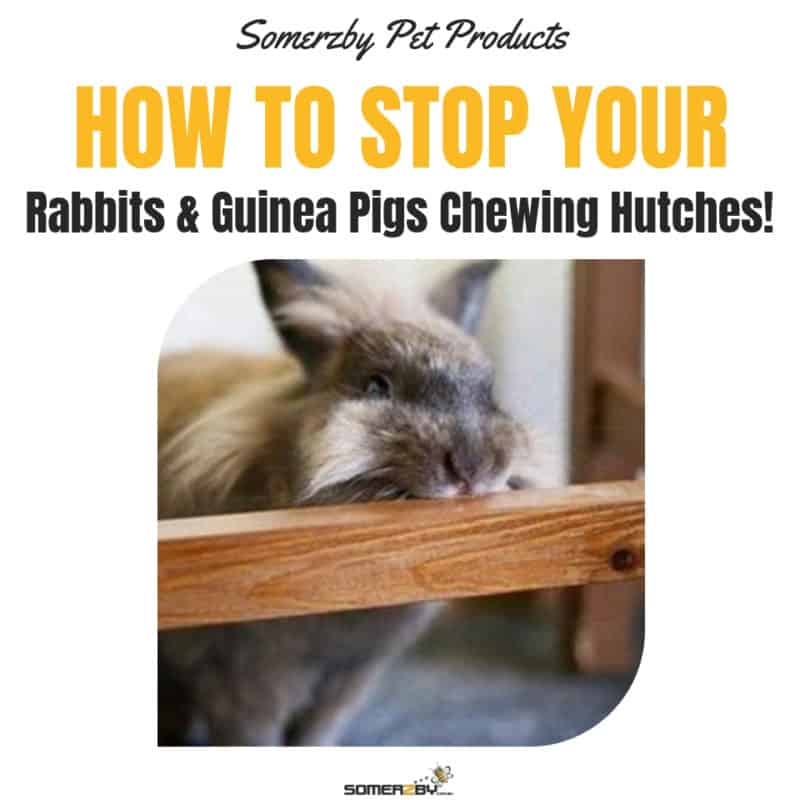 How to stop rabbits and guinea pigs chewing wooden hutches