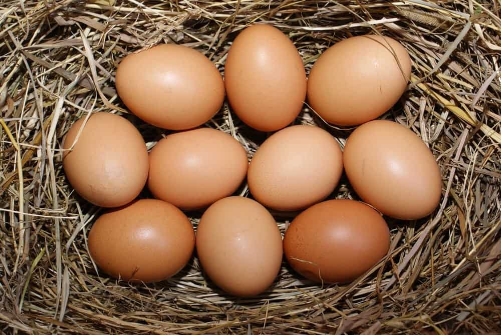 Brown Large Brahma Eggs. This Breed averages laying 3-4 large eggs a week