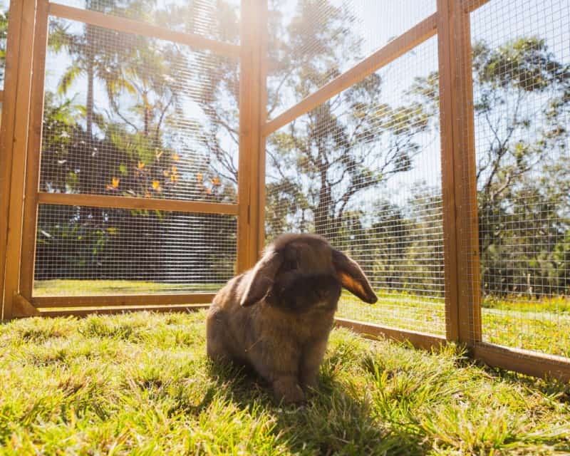 Large build of Estate Package can house many Rabbits