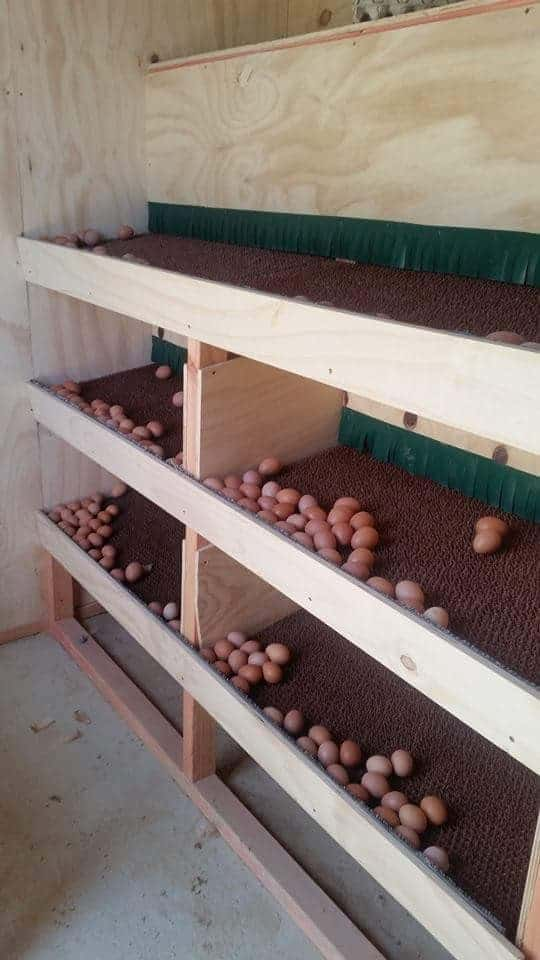 Eggs to roll towards the front or back of the nesting box